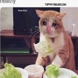 meme funny healthy sad