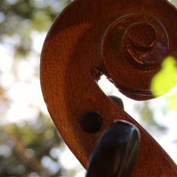 violin scroll brown outside photography freetoedit