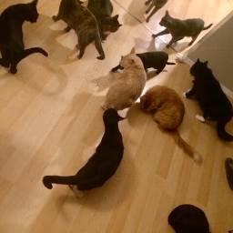 night cats kitten kitty catgang