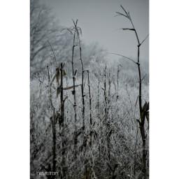 winterwonderland january snowy