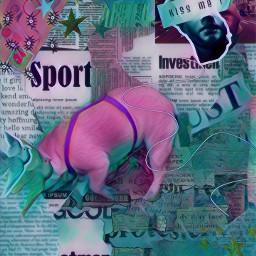 freetoedit frenchbulldog bulldog edit colours