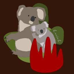 koalas help fire bushfires australia freetoedit