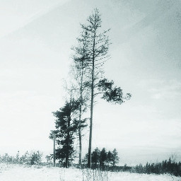 myphotography nature trees snow tree freetoedit