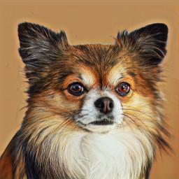 freetoedit dogo dog cute cutie