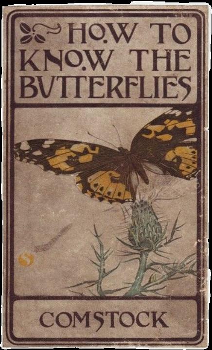 #butterfly #butterflies #aesthetic #aestheticbutterfly #softgrunge  #softgrungeaesthetic