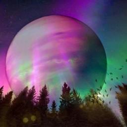 freetoedit srcbirds birds northernlights violet eclipse