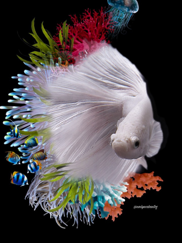 #freetoedit #fish #doubleexposure #corals #underwater