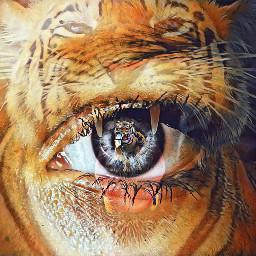 freetoedit tigerface ircmysteriouseye mysteriouseye