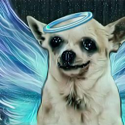 freetoedit dog firulais alas srcangelwings angelwings