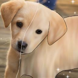freetoedit challenge cool dog hund ectoonifyyourpet toonifyyourpet toonimal #toonpet