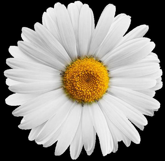 #lucymy #NOremix #flowerslucymy #Margherita #