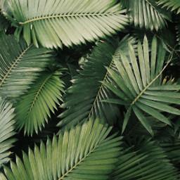 aesthetic green nature plant background freetoedit