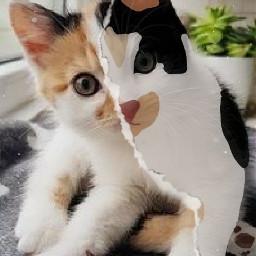 cat mypet lovely ectoonifyyourpet toonifyyourpet toonimal #toonpet
