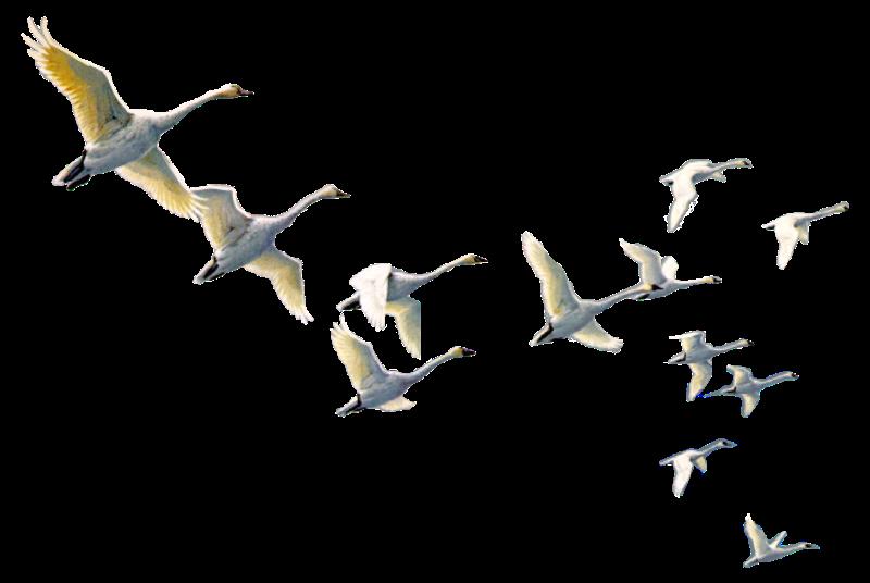 #bird#sticker#