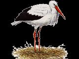 #heron#bird#sticker#