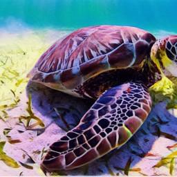 ocean turtles averygrace freetoedit