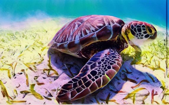 ❤️❤️❤️🐢love sea turtles they are so cute #ocean #turtles #averygrace #freetoedit 😁