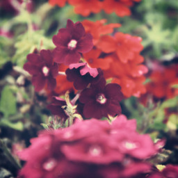 nature flowers groundflowers tinyflowers foreground freetoedit
