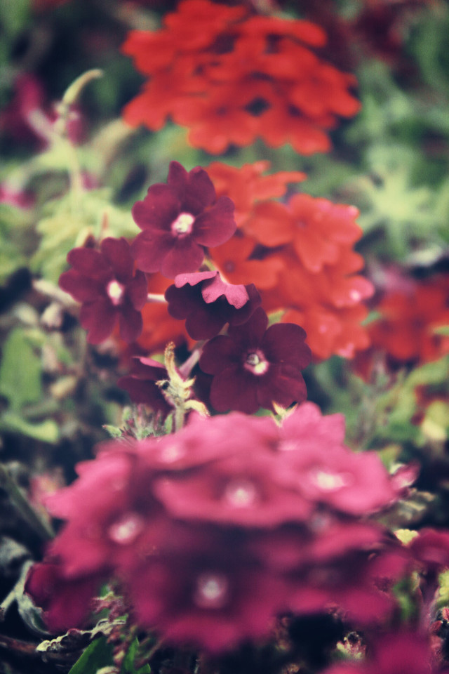 #nature #flowers #groundflowers #tinyflowers #foreground #depthoffield #lowangleview #closeupshot #naturephotography                                                        #freetoedit