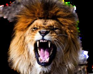 lion lions lionking lion_king king freetoedit
