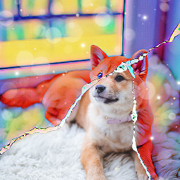 freetoedit shibainu rainbow rip rug