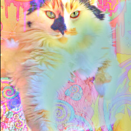 misothecat calico cat themishow toonifyyourpet