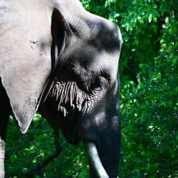 vibrant vibrantcolors animalphotography elephant photography scenery freetoedit