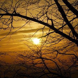 freetoedit sunset silhouette branch tree nofilter myphoto