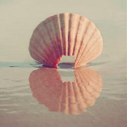 oldseashell beachscenery lowtide reflectioninwater calmwaves freetoedit