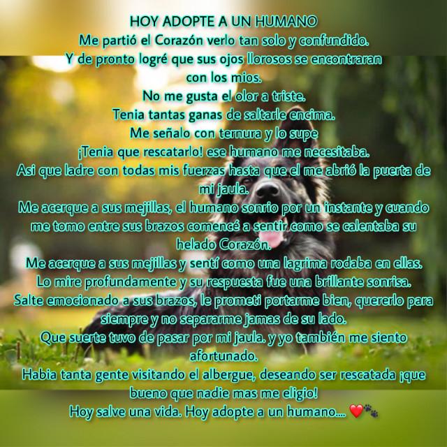 #freetoedit #adopcion #animales #amoranimal #amor #frases
