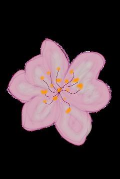 flower flores flor pink garden freetoedit