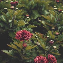 nature flowers buds bloomingflowers naturesbeauty freetoedit
