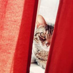cat lovely