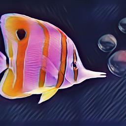 freetoedit fish bubble fishy littlefish