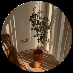 aesthetic эстетика цитрус дерево солнце freetoedit