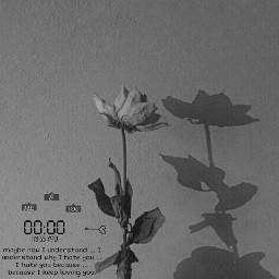 sad grey greyaesthetic aesthetic greyrose freetoedit