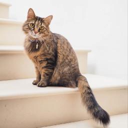 cat cats kitty animal animals freetoedit