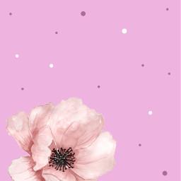 flower pink background backgrounds freetoedit