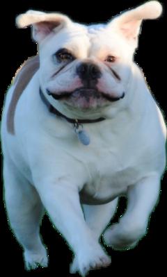 runningdog freetoedit