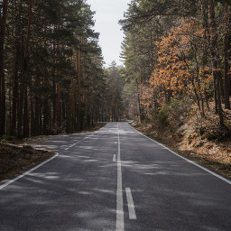 road nature trees background backgrounds freetoedit
