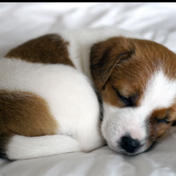 freetoedit puppy doggie dog littledog
