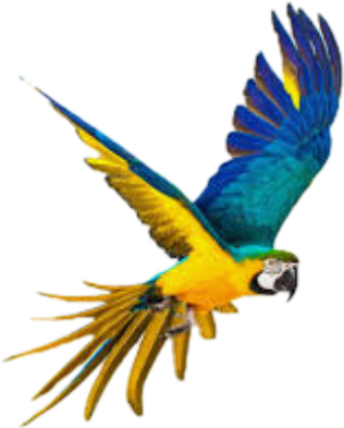 Parrot Sticker By Startouchedturtle