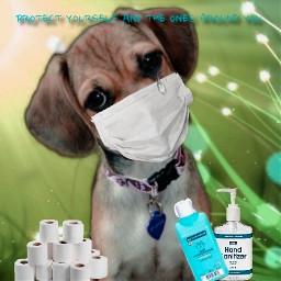 keepsafe coronavirus itscoronatime protectyourself safetydoggo