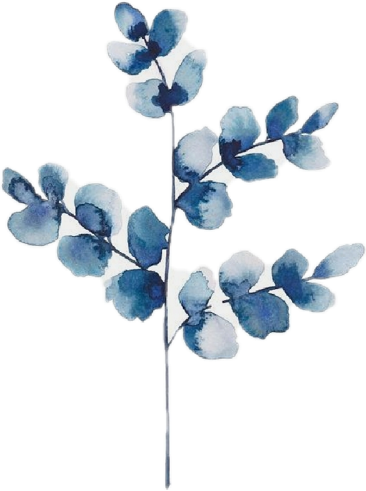 #vscogirl #vsco #flowers #lavanda