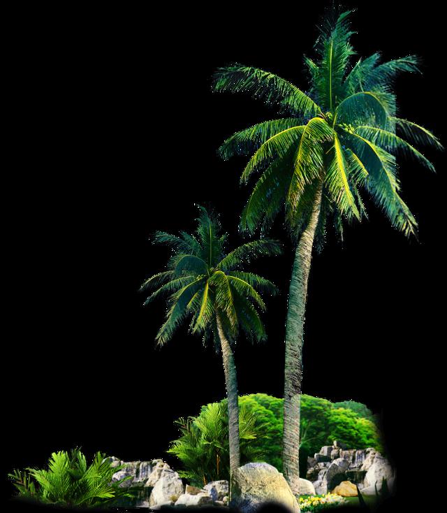 #freesticker #trees #palmtrees #landscape #remixit