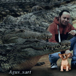 freetoedit crocodile dog buaya anjing