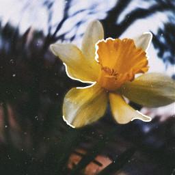 freetoedit aesthetic flower flowerphotography flowers