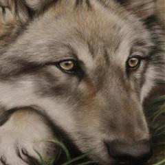 wolffyie