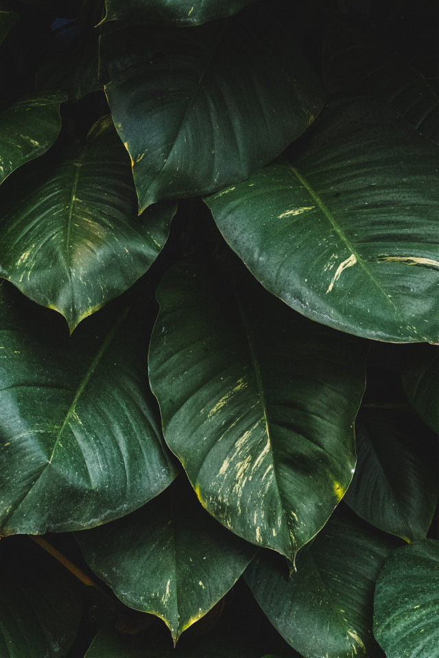Create a surreal remix!	 Unsplash (Public Domain) #green #leaves #background #backgrounds #freetoedit