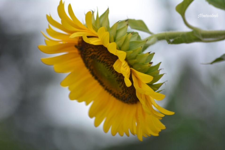 #nature #photography #flower #beautifull